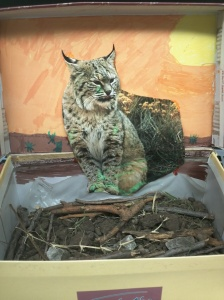 The Bobcat.