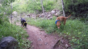 My dogs get worn out when we go to Colorado. I take them out walking numerous times a day. They run and run and run!
