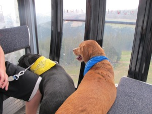 This was Cooper's first time going up in the gondola. He enjoyed looking out of the window!