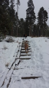 My dogs love Colorado and playing in the snow! They particularly enjoy running without their leashes.